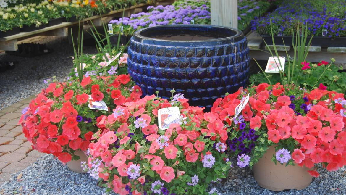 Plants and Flowers that Flourish in Cape May NJ Coastal Climate