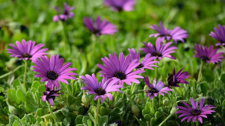 Tips for April Gardening